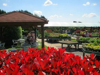 garden-centre-coffee-shop-5