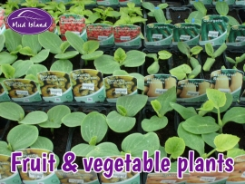 fruit-and-vegetable-plants-1