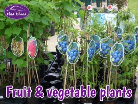 fruit-and-vegetable-plants-3