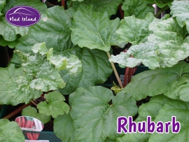 fruit-and-vegetable-plants-rhubarb