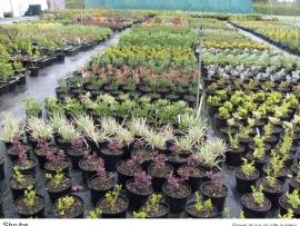 21-shrubs