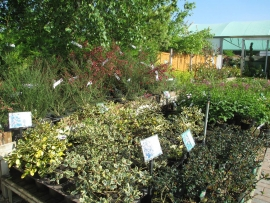 mud-island-garden-centre-gallery-12