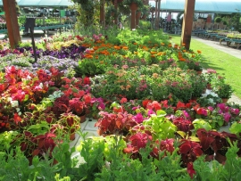 mud-island-garden-centre-gallery-13