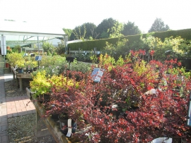 mud-island-garden-centre-gallery-14