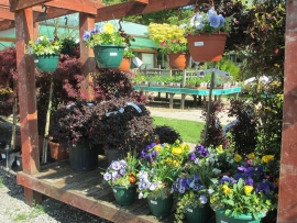 mud-island-garden-centre-gallery-15