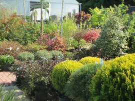 mud-island-garden-centre-gallery-16