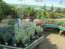 mud-island-garden-centre-gallery-17