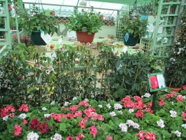 mud-island-garden-centre-gallery-27