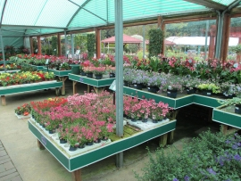 mud-island-garden-centre-gallery-29