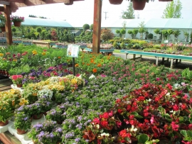 mud-island-garden-centre-gallery-37