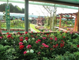 mud-island-garden-centre-gallery-41