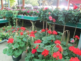 mud-island-garden-centre-gallery-42