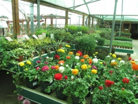 mud-island-garden-centre-gallery-44