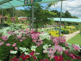 mud-island-garden-centre-gallery-8