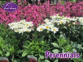 perennials-perennials