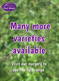 many-more-varieties