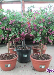 specimen-plants-hampshire-63