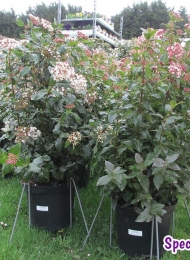 specimen-plants-hampshire-64