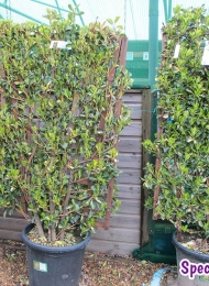 specimen-plants-hampshire-67