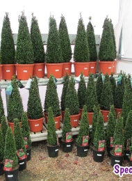 specimen-plants-hampshire-70