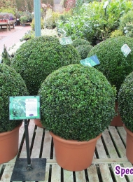 specimen-plants-hampshire-71