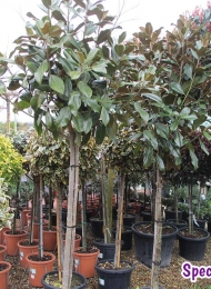 specimen-plants-hampshire-72