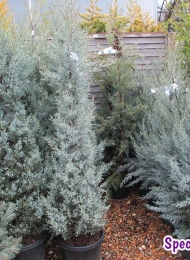 specimen-plants-hampshire-73