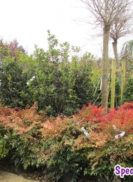 specimen-plants-hampshire-74