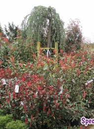 specimen-plants-hampshire-76