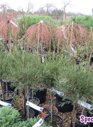 specimen-plants-hampshire-77