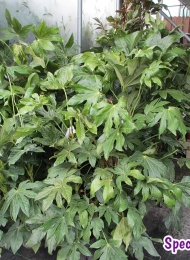 specimen-plants-hampshire-78