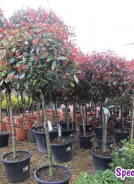 specimen-plants-hampshire-79