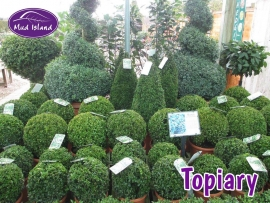 topiary-4