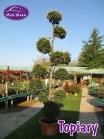 topiary-5