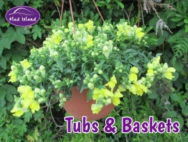 tubs-and-baskets-3