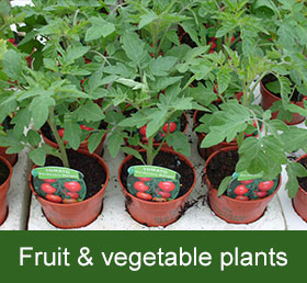 fruit and vegetable plants