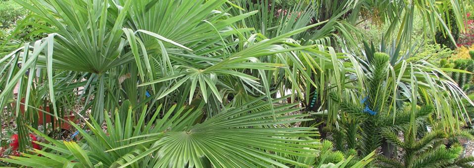 Specimen plants