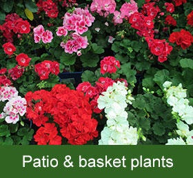patio and basket plants