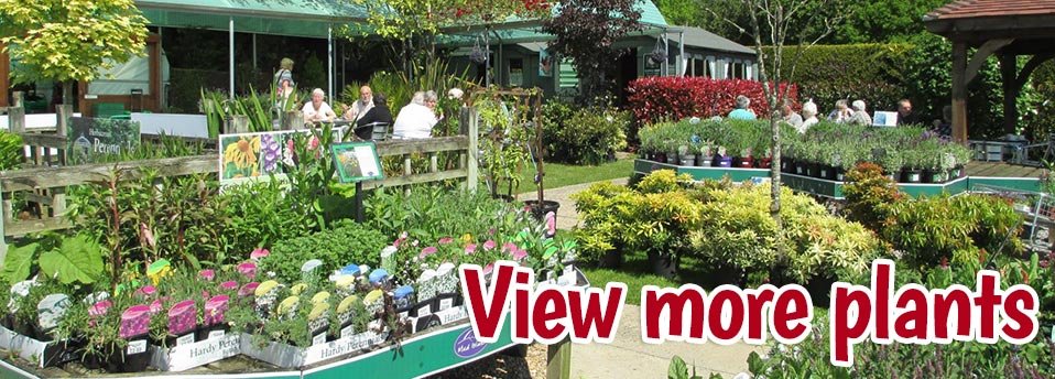 hampshire garden centre