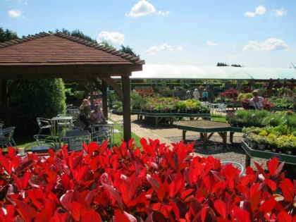 garden-centre-coffee-shop-5