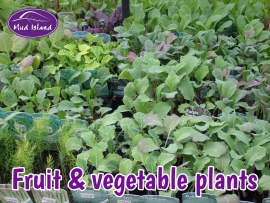 fruit-and-vegetable-plants-2