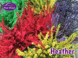 heather-4