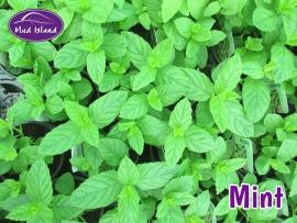 herbs-mint