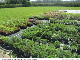 20-perennials-ready-for-the-garden-centre