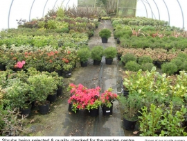 23-shrubs-being-selected-and-quality-checked-for-the-garden-centre