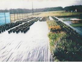 mud-island-garden-centre-history-6