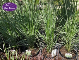 1_ornamental-grasses-2