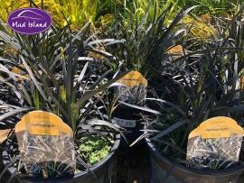 1_ornamental-grasses-3