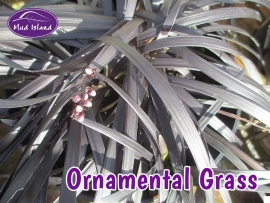 ornamental-grasses-2
