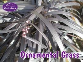 ornamental-grasses-2